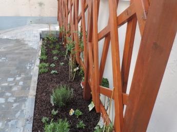 Paroi végétale pour plantes grimpantes à Lille