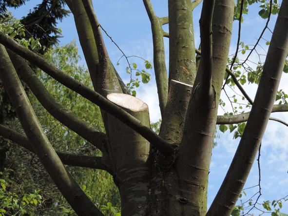 Lagage la nature au jardin paysagiste for Prix de l elagage d un arbre